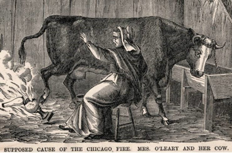 Chicago Fire Cow